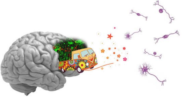 NeuroniAlternativi_LucaBonfantiNICO_WEB_imagelarge.jpg