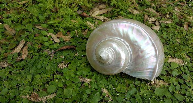 pearl-fire-1602526_1920.jpg
