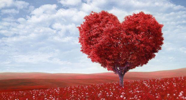 All'Università di Torino scoperto un ormone che attenua l'ipertrofia miocardica e lo scompenso cardiaco